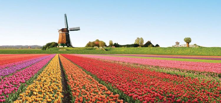 L'Olanda e i suoi Tulipani